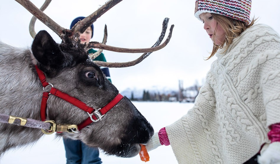 Girl Feeding Reindeer